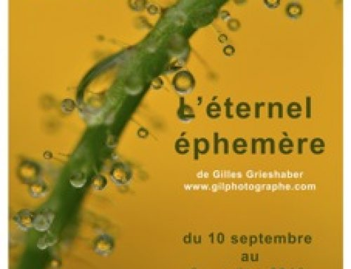 Photo Exposition : Gilles Grieshaber